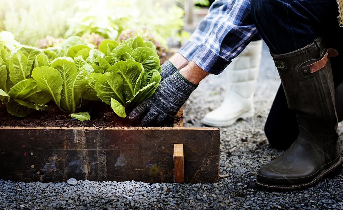armstone---Things-to-Consider-When-Building-a-Raised-Vegetable-Garden