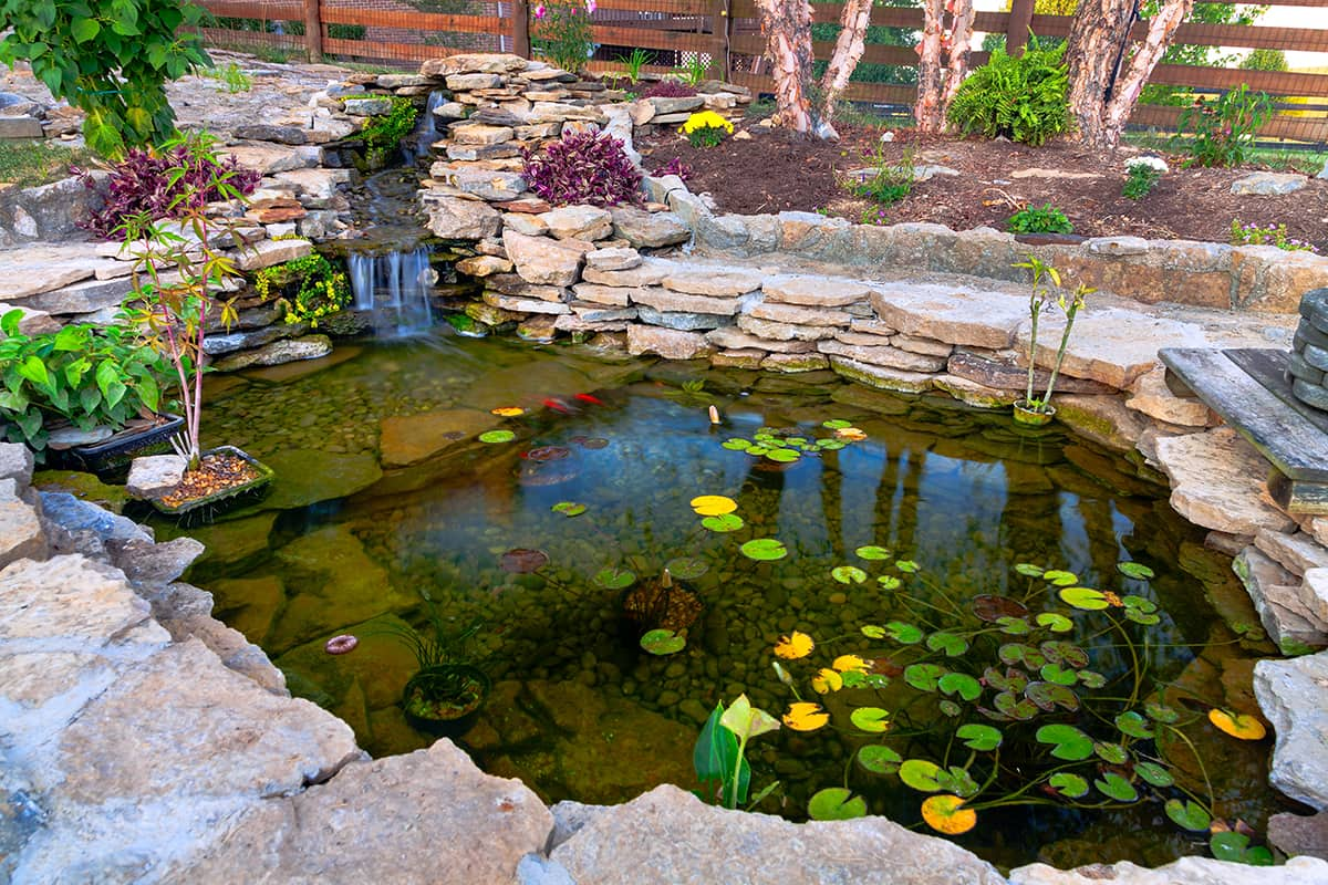 armstone - How to Create an Australian Native Landscaped Garden